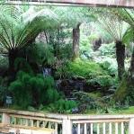 TAS Botanical Gardens 10