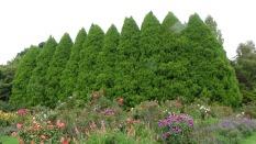 TAS Allendale gardens 11