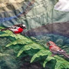 TAS Deloraine Silk Art 2