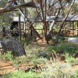 NSW Aust Inland Botanical Gardens 5